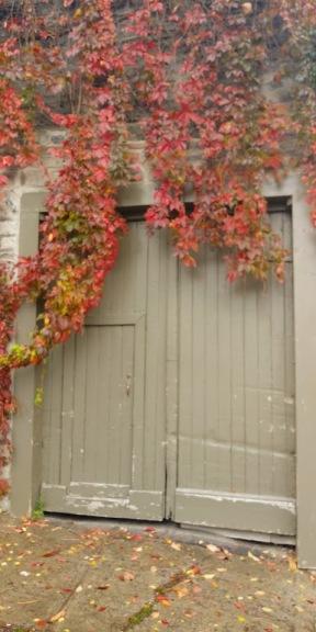 leafy door