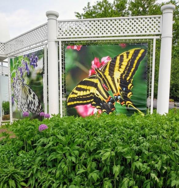colum butterfly
