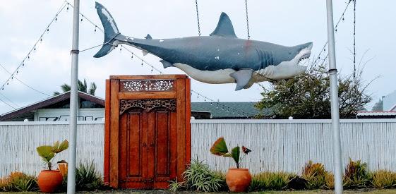 shark door