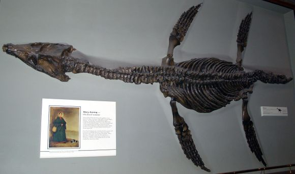 Rhomaleosaurus_cramptoni_(fossil)